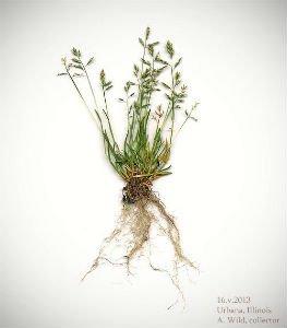 Гербарий: выбор растений, сушка, оформление, гербарий в школу, детские поделки - Правила сбора растений длягербария